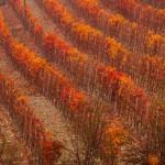 10 - I colori dell'autunno